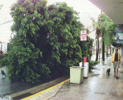 Duval Street in Key West, FL after Hurricane Georges in 1998